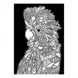 Colourme Velvet Cockatoo Art Poster