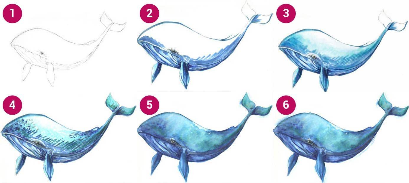 Watercolour Whale Steps