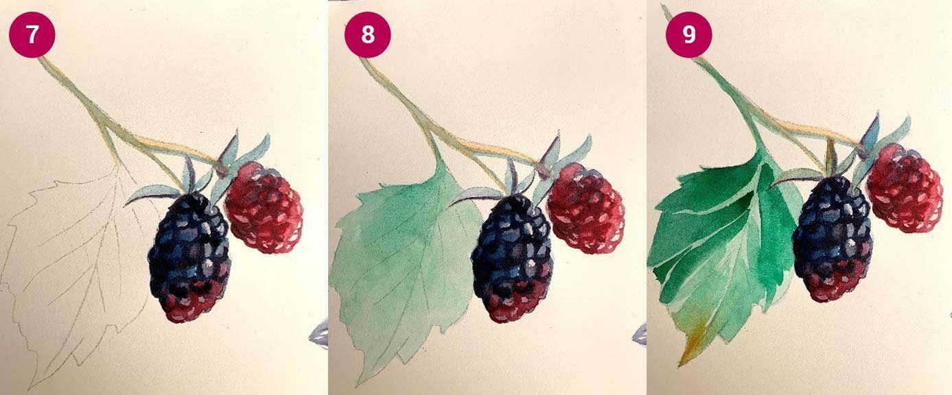 W&N Boysenberry Steps 7-9