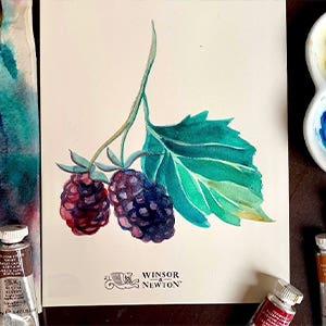 W&N Boysenberry